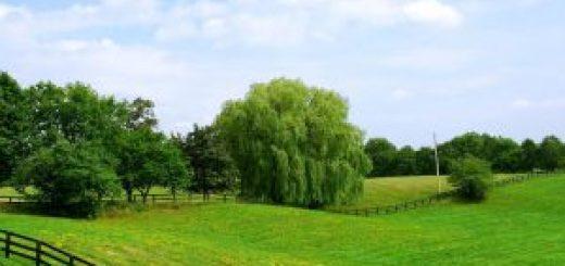Требуется размежевать землю на участки через суд?